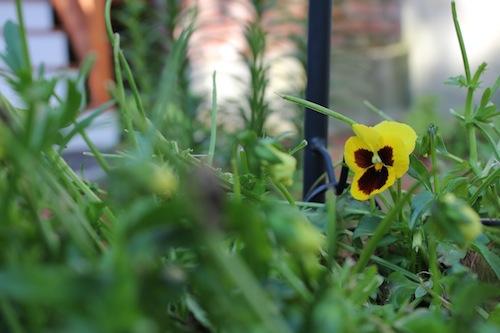 The Final Living Flower